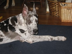 Dog Training: Electronic Dog Training Collars