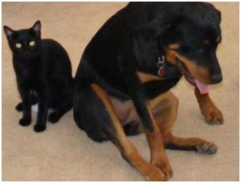 Behaviors of Intact Female Dogs