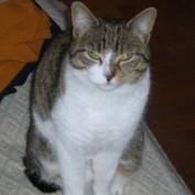 Coeus profile image