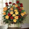 Say it with Roses - Significance and Meaning of Different Colors of Roses