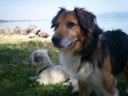 Barney and Tiggy