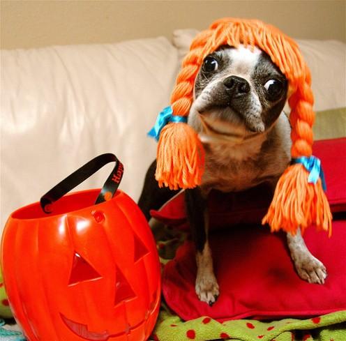buy halloween  costumes