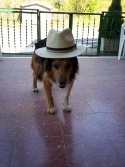 Chic Dog