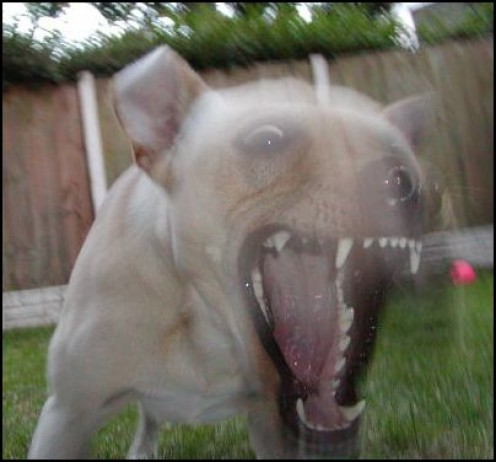 Warning Signs of Potentially Dangerous and Aggressive Dogs