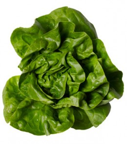 Butterhead (or butter) lettuce