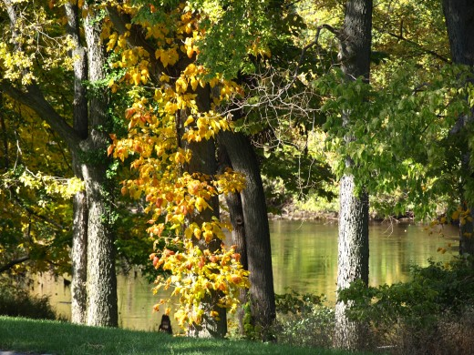 Early fall 2008 across the street on the Grand River, Michigan
