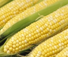 Peaches and Cream Corn