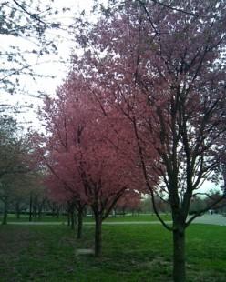 Flushing Meadows Corona Park in the springtime.