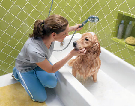 Bathing your dog should be a pleasant experience.