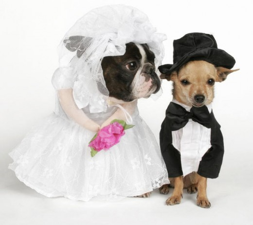 "It amuses some people to ""marry"" their pets!"