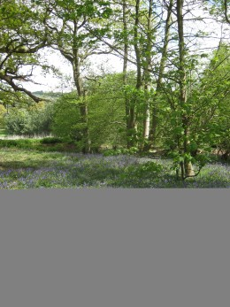 """""""It was late April and the Bluebells were out."""""""