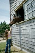 Therapeutic Riding: How Horses Help and Inspire People