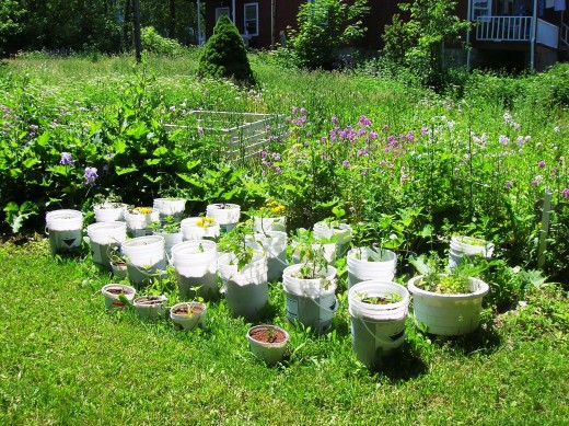 Container Garden Bob Ewing photo
