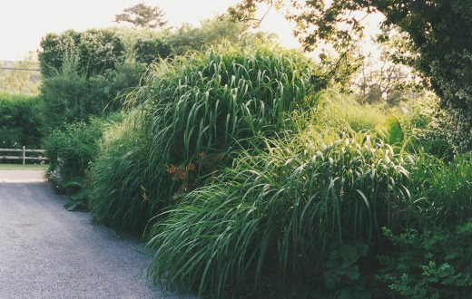 K-05 - Grasses at the entrance.