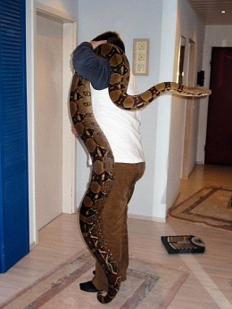 Boa Constrictor:  Smaller than large pythons, still quite a handfull at 13 feet long!  www.hilariousheadlines.com photo