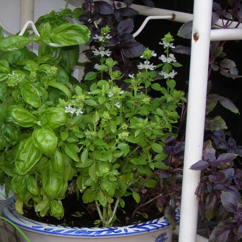 Herb garden container tips for success out or indoors - Indoor herb garden containers ...