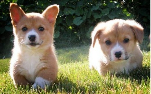 """Flickr images: manyfires; """"go puppies go"""""""