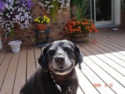 Treats always make Lady Smile!