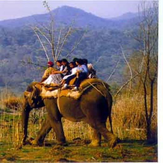 Natural wildlife and beauty of Corbet National Park