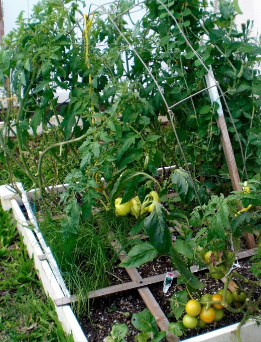 Yellow peppers, tomatoes, peas and green onions
