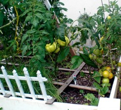 Grow a Successful Square-foot Garden