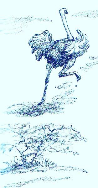 Running ostrich - Art by Jerilee Wei