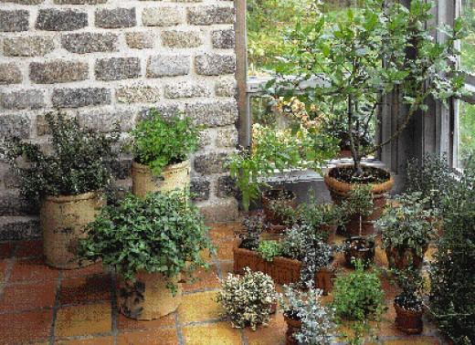 Very nice indoor herb garden
