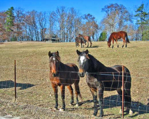 Tryon Horses