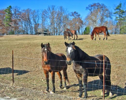 Tryon Horses