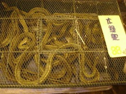 Snake meat storage. Reach in and grab one.