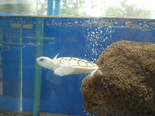 Actually there were two...held in different tanks. Attractive animals