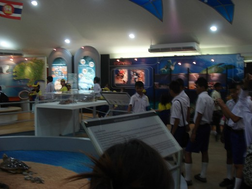 The displays covered every aspect of a Marine Turtles life