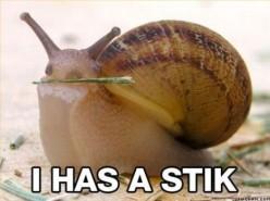 Good Pets For Kids | Pet Snails