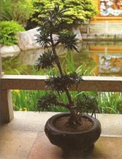 A penjing, which is a Chinese bonsai, is displayed in front of a granite railing.