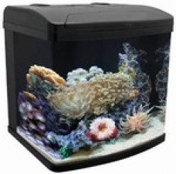 Great Starter Fish Tank For Salt Or Fresh Water