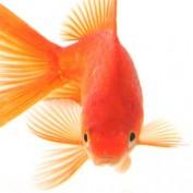 DudeWithAGoldfish profile image