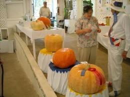 The pumpkin contest.