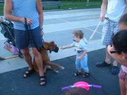 Child Abuse. Harness, leash ,child, dog.
