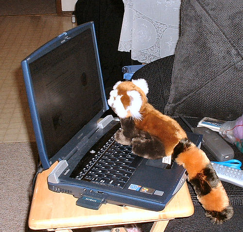 """Meet a Firefox"" Photo Courtesy of: /geeks (Pool)"