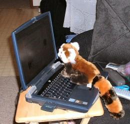 """Meet a Firefox"" Photo Courtesy of: /geeks (Pool)"