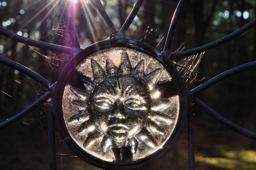 Early morning sun passes through a garden sun with a fringe of spider webbing.