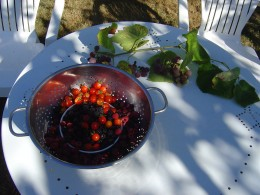 Autumn fruits gathered from the hedgerows and garden