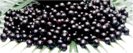 Big News Flash! Acai Berries are just Berries! They contain no magical powers!