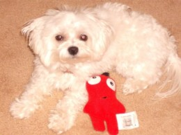 My Maltese dog Valentino.