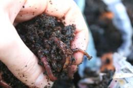 Worm Compost Materials