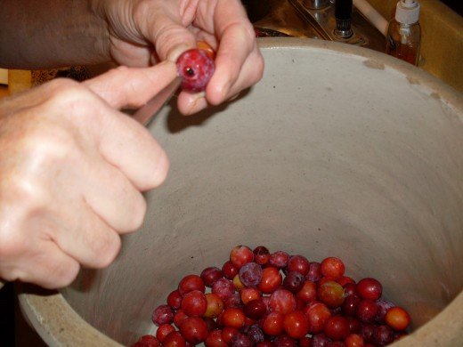 Prick each plum in two or more places to prevent them from bursting when heated. Place plums in a crock or bowl.
