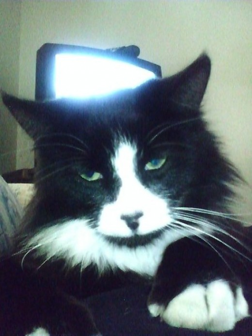 Zorro the cat just has that come hither look that only a cat can pull off.