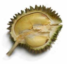 Yah Kang (Centipede Durian)