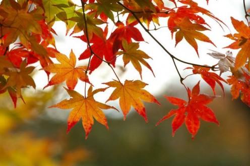 Beatiful Fall leaves