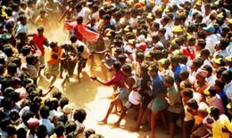 Jallikkattu(a form of bull fight), Tamil Nadu, India